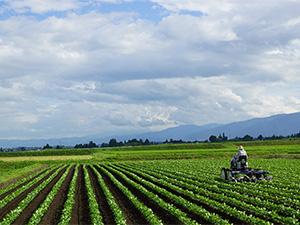 安曇野契約栽培農場